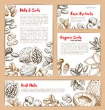 Vector sketch posters of nuts and fruit seeds. Nuts and fruit seeds or beans sketch poster and banner design. Vector peanut or coconut and hazelnut, pistachio or Royalty Free Stock Image