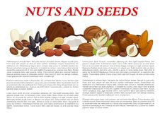 Vector nuts and fruit seeds nutrition poster. Nuts and fruit seeds or kernels information poster template on nutrition facts. Vector design of almond, filbert or Stock Image