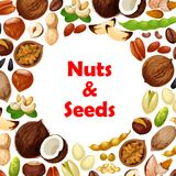 Vector poster of nuts and fruit seeds. Nuts and fruit seeds poster. Vector walnut, hazelnut or peanut and coconut, almond or pistachio and bean legume pod Stock Photo