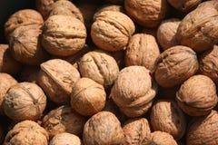 Nuts, fruits of wallnut, Juglans regia L. Stock Images