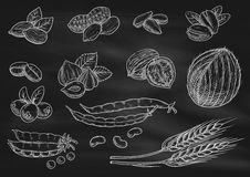 Nuts, grain chalk sketch icons on blackboard Stock Images