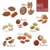 Nuts stock illustration