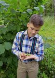Nuts in the hands of a boy in the woods boy, nature, garden, child, young, green, outdoors, summer, plant, gardening, flower, gras Royalty Free Stock Photography