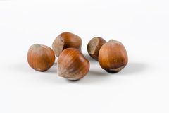 Nuts. Hazel (Corylus sp.) nuts on a white background royalty free stock photo