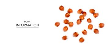 Nuts hazel pattern. On white background isolation royalty free stock photography