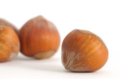 Nuts, Hazelnut. Close up view of hazelnuts Royalty Free Stock Photography