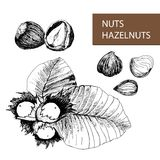 Nuts. Hazelnuts. Stock Photography