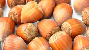 Nuts Hazelnuts Close Up Royalty Free Stock Photo