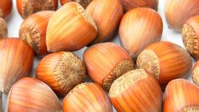 Nuts Hazelnuts Close Up Royalty Free Stock Photo