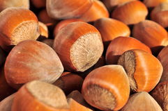 Nuts Hazelnuts Close Up Royalty Free Stock Photography