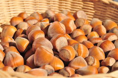 Nuts Hazelnuts Close Up Stock Image