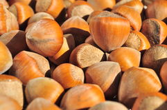 Nuts Hazelnuts Close Up. Close up view of hazelnuts, nuts Royalty Free Stock Photography