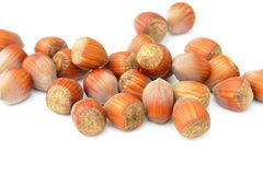 Nuts Hazelnuts Isolated White Royalty Free Stock Photography