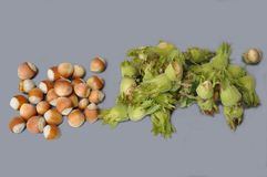 Nuts (hazels) Royalty Free Stock Photo