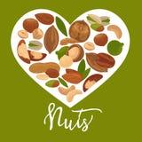 Nuts heart vector poster of organic raw nut vegetarian healthy food vector illustration