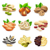 Nuts icons vector set Royalty Free Stock Photography