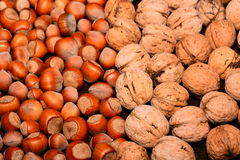 Walnuts and hazelnuts. The image on the whole picture of nuts Royalty Free Stock Image