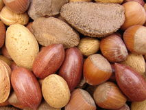 Free Nuts In Shells 3 Royalty Free Stock Images - 14265589