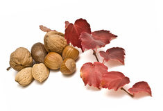 Nuts and an ivy branch. Royalty Free Stock Photography