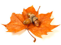 Nuts on a leaf (isolated) Stock Images