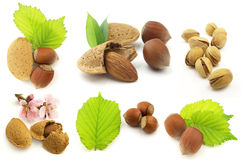 Nuts with leaves Stock Photography