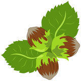 A nuts and leaves vector. Floral decorative picture with a nuts and leaves Stock Photography