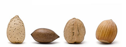 Nuts on line. Stock Images