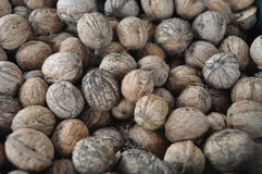 Nuts. Many nuts from the garden Royalty Free Stock Images