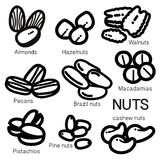 NUTS. Many kinds of nuts are illustrated as an simple icon Royalty Free Stock Images
