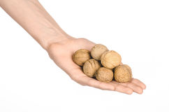 Nuts and meal preparation topic: human hand holding walnuts in shell isolated on white background in studio Royalty Free Stock Photo