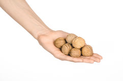 Nuts and meal preparation topic: human hand holding walnuts in shell isolated on white background in studio Royalty Free Stock Photography