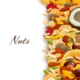 Nuts Mix Background. Nuts mix with peanut hazelnut pistachio coconut background vector illustration Stock Photo