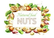 Nuts mix. Natural organic food. Watercolor  illustration Royalty Free Stock Photos