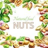 Nuts mix. Natural organic food. Watercolor  illustration Stock Photos