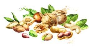 Nuts mix. Natural organic food. Watercolor  illustration Stock Image