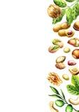 Nuts mix top view. Natural organic food. Watercolor Stock Photos