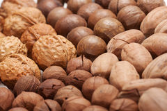 Nuts Mixed. Mixed shells nuts for background Stock Photography