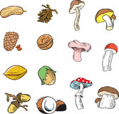 Nuts and mushrooms Stock Photos