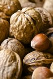 Nuts and organic products Stock Images