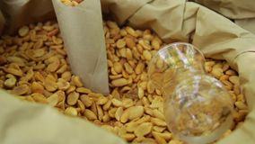 Nuts in a bag on the counter. Peanuts close-up. stock footage