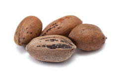 Nuts pecans in shell closeup Royalty Free Stock Photo