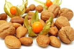 nuts physalis Royaltyfri Fotografi