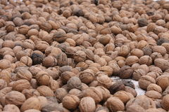 Nuts. Pile of nuts laid on the ground royalty free stock photography