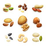 Nuts Realistic Set Stock Image