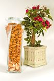 Nuts and Roses. A designer jar of whole almonds and brazil nuts stands next to a pot of miniature red roses on a white background Royalty Free Stock Photo