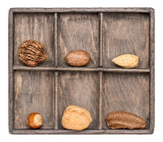Nuts in rustic wooden shadow box Royalty Free Stock Images