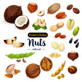 Nuts, seed, bean cartoon icon set for food design Royalty Free Stock Photo