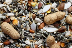 Nuts and seeds. For parrots and birds Stock Photos