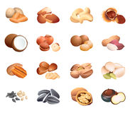 Nuts and seeds Royalty Free Stock Image