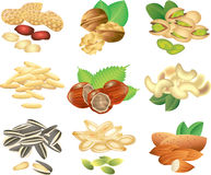 Nuts and seeds photo-realistic set. Nuts and seeds photo-realistic detailed set Stock Photos
